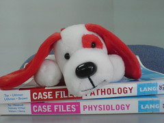 dawg on books