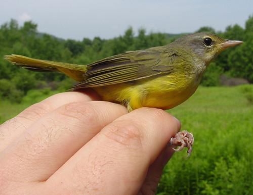 another birdQUZ photo!