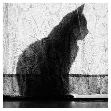 """Paisley Cat • <a style=""""font-size:0.8em;"""" href=""""http://www.flickr.com/photos/150185675@N05/31627215616/"""" target=""""_blank"""">View on Flickr</a>"""