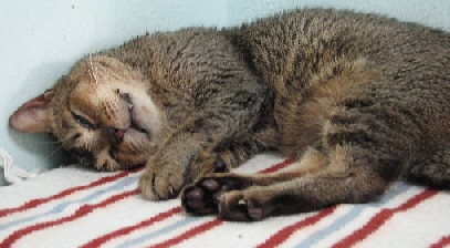 Cattery_FivCats_20070101_05x