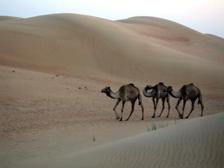 CAMELS!!!!!