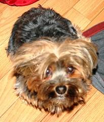 03.04.07 Briar Pup 3
