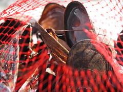 Menemsha mussels