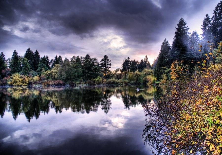 The Hidden Pond