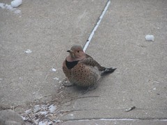 flicker on the sidewalk
