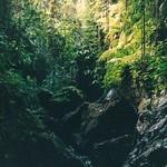 "Balinese Jungle <a style=""margin-left:10px; font-size:0.8em;"" href=""http://www.flickr.com/photos/36521966868@N01/15568013/"" target=""_blank"">@flickr</a>"