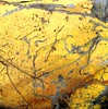 abstract yellow scraped tank
