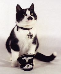 hitler-kitty