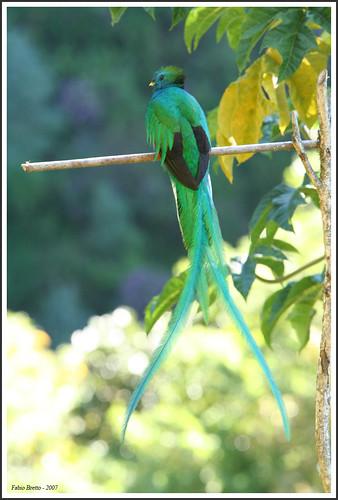 Quetzal 03