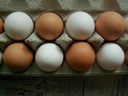 Checkerboard Egg Carton