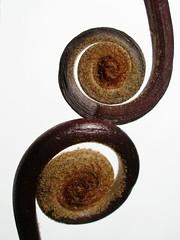 Spirals - Galeria de Tanakawho - Flickr