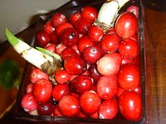paperwhites in cranberries