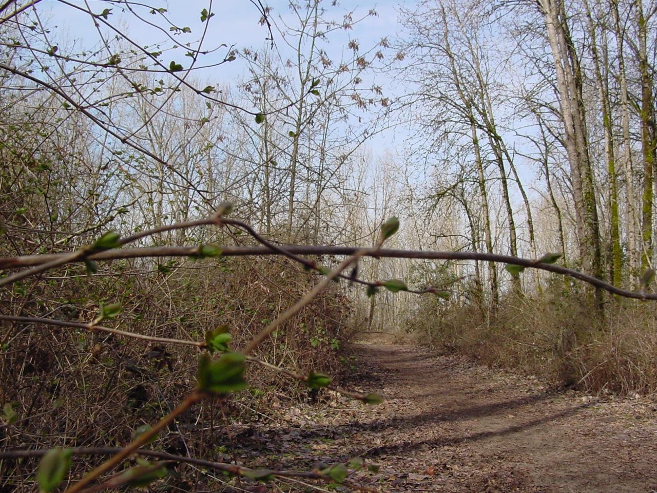 Spring Trail.JPG