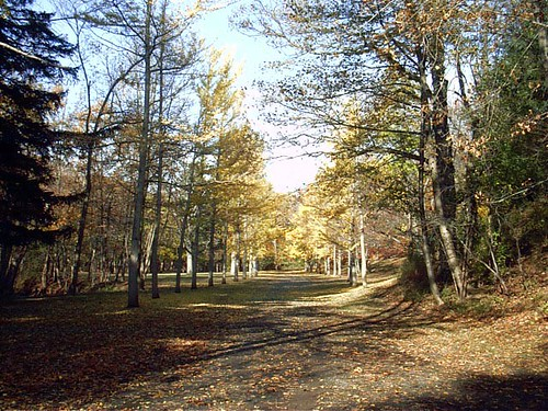 Woodlawn-Cemetery-2