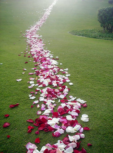 Path of white, purple, and pink roses on a green lawn