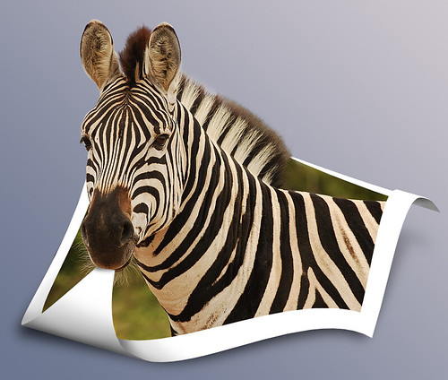 Zebra to OOB
