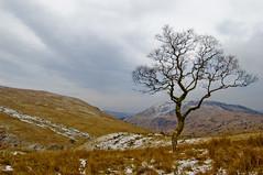 Birk In Glen Finglas (Brig O' Turk, Trossachs,...