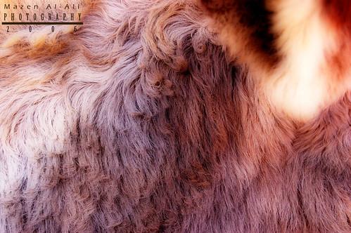 Donkey Wool - Texture