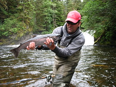 Waterfall coho salmon