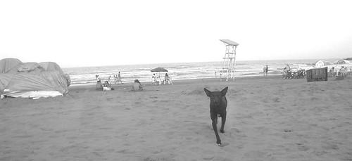 Perro Negro en la Playa