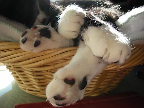Sophia Toes / Dedos de Sophia
