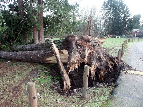tree blown down