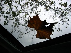 sunroof view