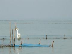 India Orissa - Chilika Lake