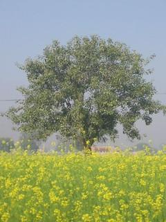 Rajasthan 226