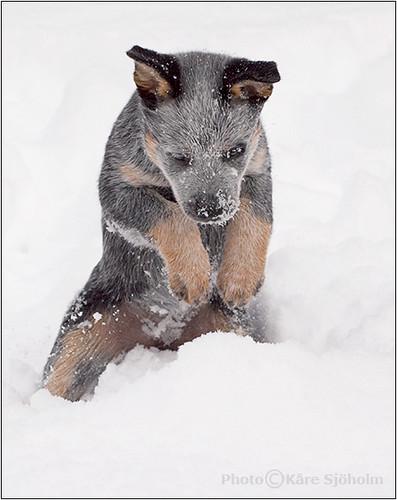 060304 Snowtime 046