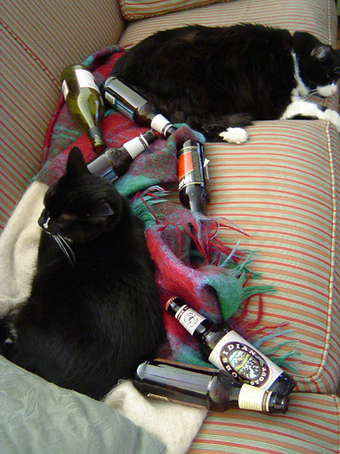 partied out cats
