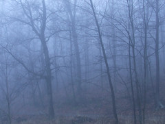 foggy view from porch