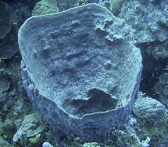 Bowl Sponge