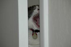 Yawning Musubi