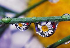 sparklin' drops of spring