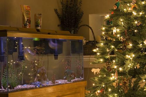 Weihnachtsdeko Aquarium.Weihnachtsdeko Im Aquarium Fischtante S Erfahrungen Im Aquaristikladen