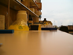 Life seen by a micropipette resting on the bench