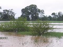 Kollibacchalu Dam -Malenadu Heavy Rain Effects Photography By Chinmaya M.Rao   (112)