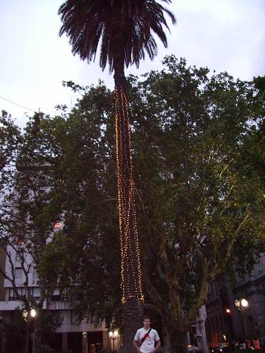 Downtown Me @ the Christmas tree