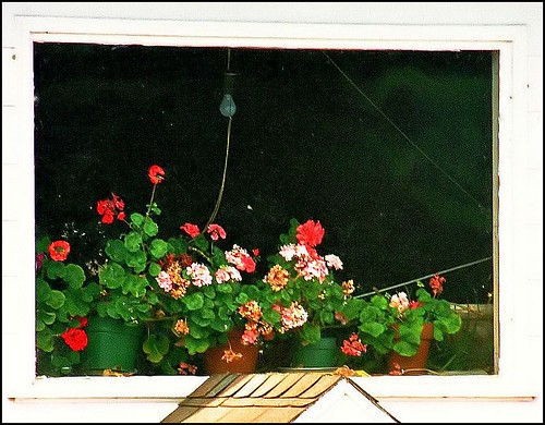 The winter geranium window by ..jolli.......