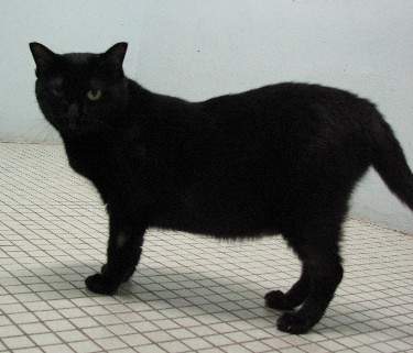 Cattery_FivCats_20070101_13x