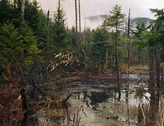 Beaver Hut
