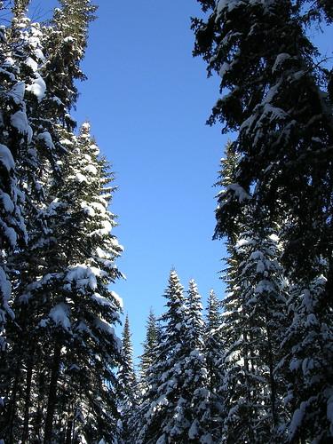 La forêt est source de dizaines de produits pouvant avoir une valeur.