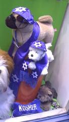 jewish dogs 2