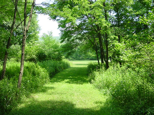 Very Green Trail