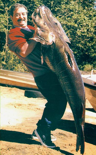 Pesca Surubi
