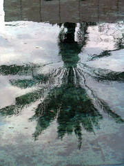 Rothschild - Founders Square - reflected tree