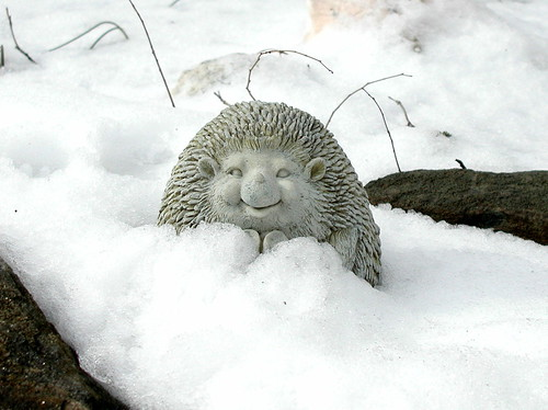 snow hedgehog