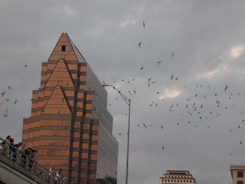 Bats over Austin
