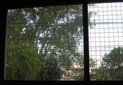 Mi ventana